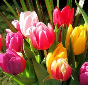 поздравления с днем 8 марта